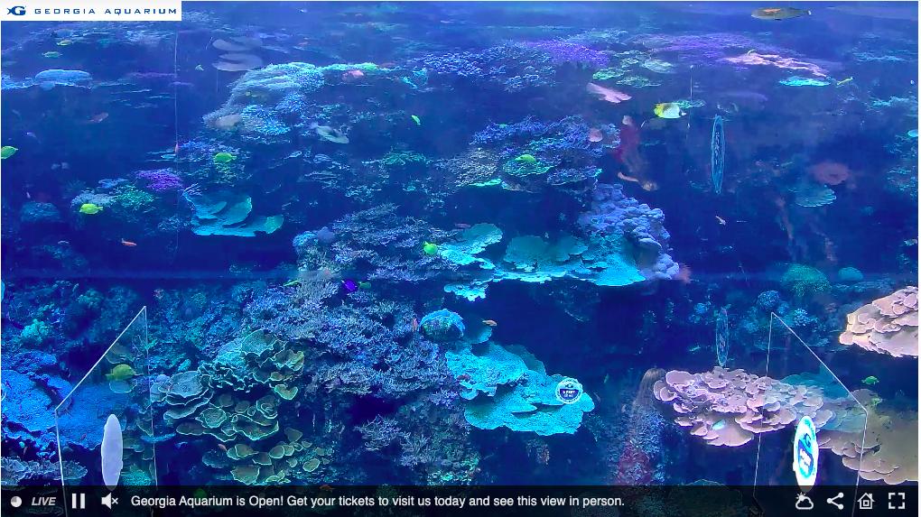aquarium cam